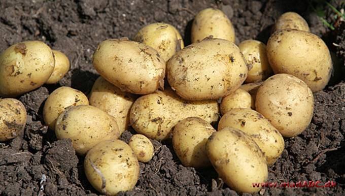 hvor mange g kartofler pr person